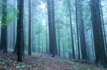 Лемківскій ліс в Вірхни